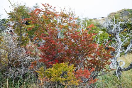Autumn colors and fog in the Torres del Paine mountains, Torres del Paine National Park, Chile 写真素材