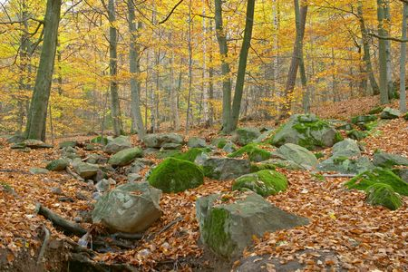 Autumn wood, red and yellow leaves and trees, moss and stones, Sweden Stock Photo