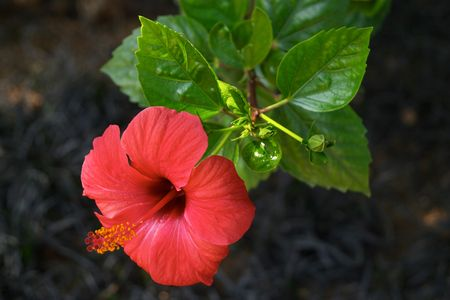 Red and beautiful exotic flower Stock Photo