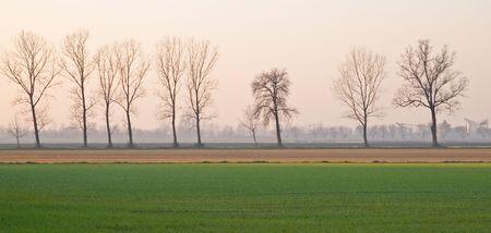 Poplar trees in a winter agrarian landscape near Gossolengo, Valtrebbia, Italy