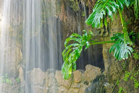 revitalizing: Cave, waterfall and aquatic plant in Parque Genoves, Cadiz, Andalusia, Spain Stock Photo