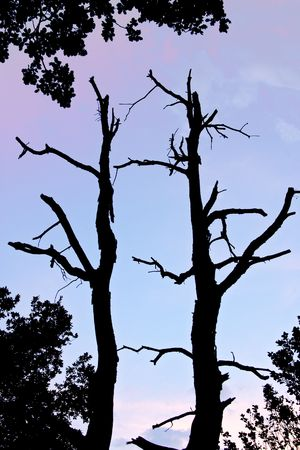 Withered black tree silhouette against sky, Valtrebbia, Italy photo