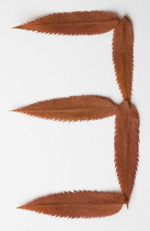 3 three one number: alphabet and numbers with autumn brown red dry leaf on white background photo