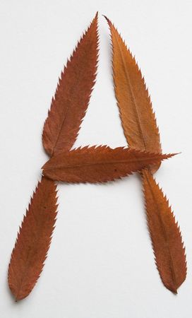 A letter: alphabet and numbers with autumn brown red dry leaf on white background photo