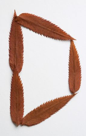 D letter: alphabet and numbers with autumn brown red dry leaf on white background photo