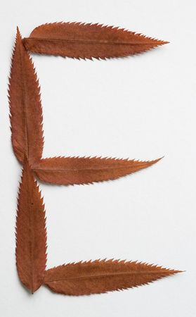 E letter: alphabet and numbers with autumn brown red dry leaf on white background photo