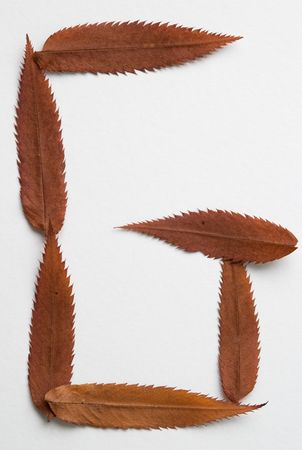 G letter: alphabet and numbers with autumn brown red dry leaf on white background photo