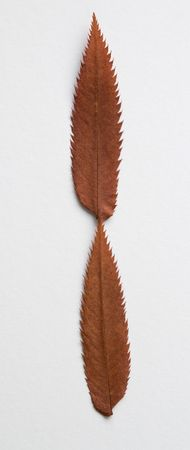 I letter: alphabet and numbers with autumn brown red dry leaf on white background photo
