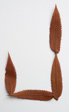 J letter: alphabet and numbers with autumn brown red dry leaf on white background photo