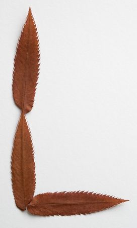 L letter: alphabet and numbers with autumn brown red dry leaf on white background photo