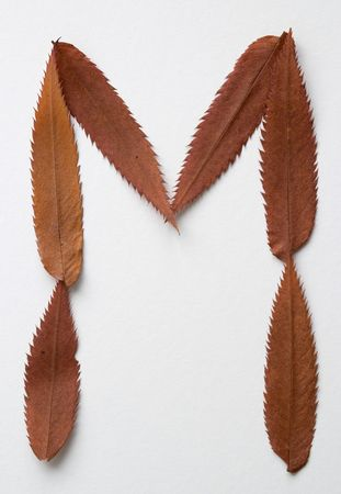 M letter: alphabet and numbers with autumn brown red dry leaf on white background photo