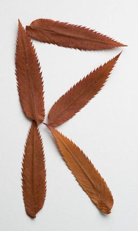 R letter: alphabet and numbers with autumn brown red dry leaf on white background photo