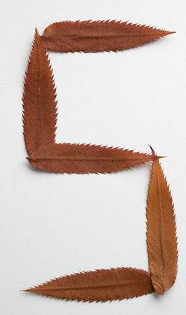 S letter: alphabet and numbers with autumn brown red dry leaf on white background photo