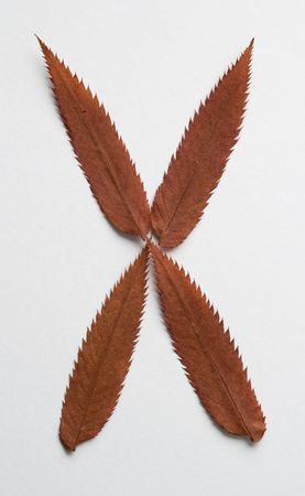 X letter: alphabet and numbers with autumn brown red dry leaf on white background photo