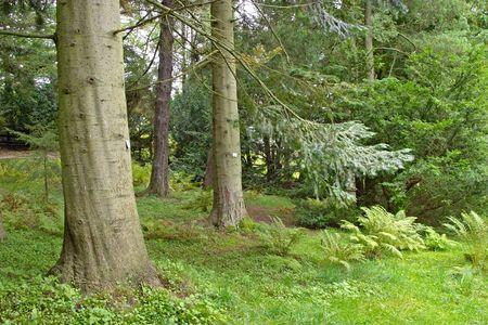 underbrush: Pine tree in a lush underbrush wood, botanical garden, Gothenburg, Sweden