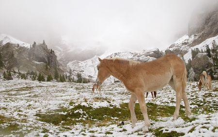 Early autumn snow and wild horse in Dolomite Mountains, Alps, Italy Stock Photo - 456835