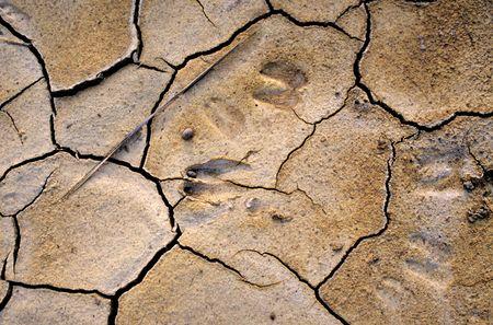 animal tracks: Le tracce degli animali nel fango secco