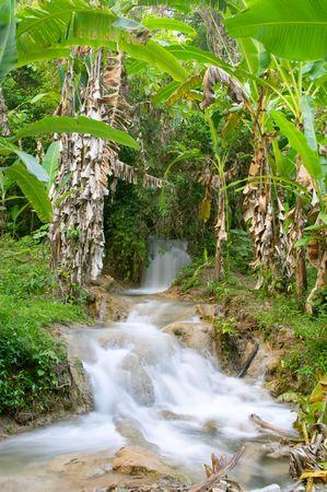 lussureggiante: Cascadas de Agua Azul cascata, Chiapas, Messico
