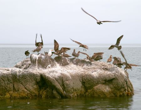Marine birds, coast of Mar de Cortes, Baja California, Mexico Stock Photo - 456572