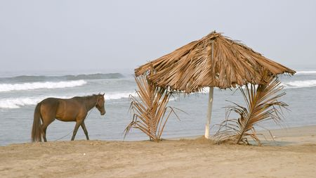 Horse and palapa on the beach of Playa Azul, Mexico Stock Photo - 456520