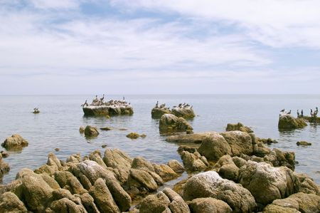 Marine birds, coast of Mar de Cortes, Baja California, Mexico Stock Photo - 456484