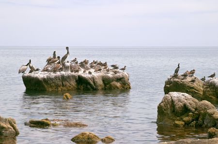 Pelican (Pelecanus onocrotalus) and marine birds, coast of Mar de Cortes, Baja California, Mexico Stock Photo - 456483