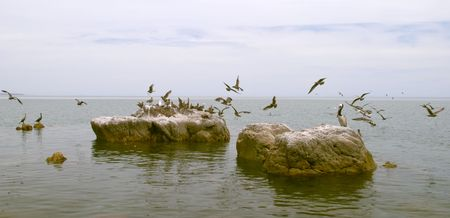 Marine birds, coast of Mar de Cortes, Baja California, Mexico Stock Photo - 456475