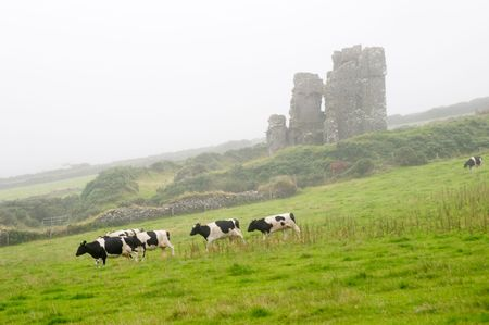 Cows and old castle, Ireland Stock Photo