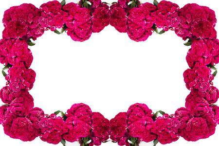 Flor de Terciopelo o Celosia Marco de flores, Flores mexicanas para ofrendas ofrendas en dia de muertos Tradición mexicana del Día de los Muertos Foto de archivo