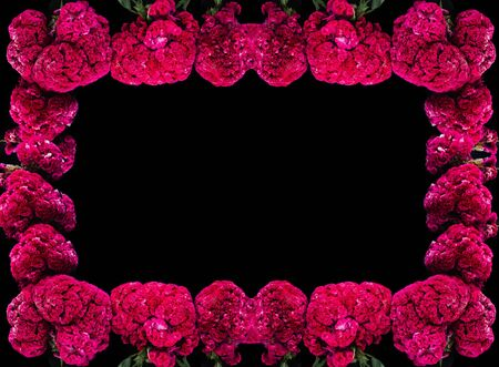 Flor de Terciopelo o Celosia Flower frame, Mexican Flowers for offerings ofrendas in di­a de muertos Day of the Dead Mexican tradition