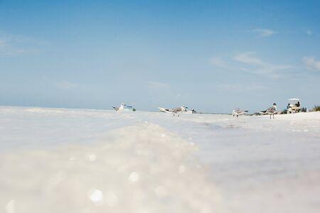 caribbean beach, Mexican ocean holbox mexico