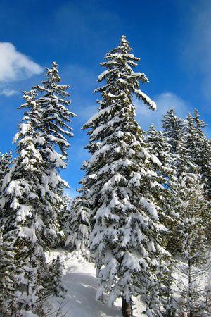 snowy trees in winter