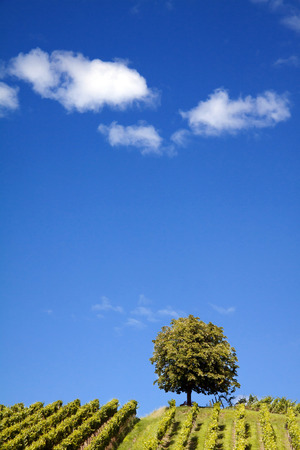Tree on the horizon, on a bright summers day
