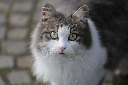 urban scene: Gray and White Cat on a Urban Scene Stock Photo