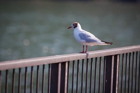 lake como: Seagull on the beach. Lake Como, Italy Stock Photo