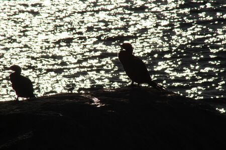 bird silhouette standing on a rock at the beach