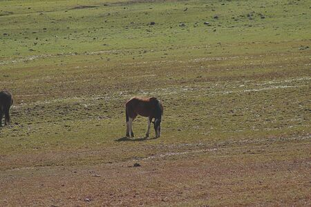 Horses eating grass in the field in Cajón del Maipo, Chile.