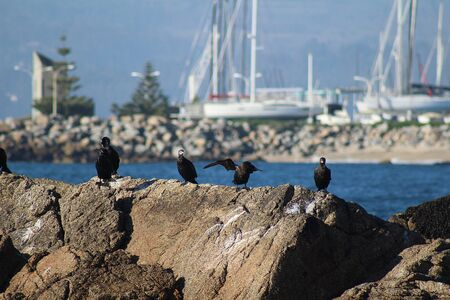 Birds standing on a rock at the evening in Algarrobo beach, central coast of Chile.
