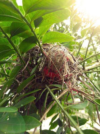 Nest of bird among leaves.