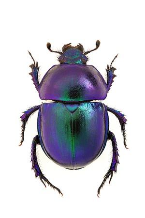escarabajo: Modificado por CombineZP