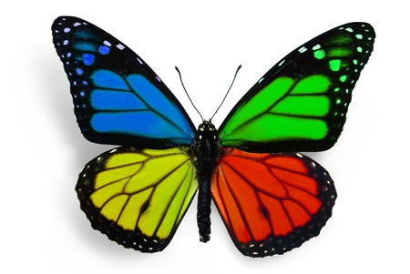 yellow butterfly: true butterfly with fantasy colours