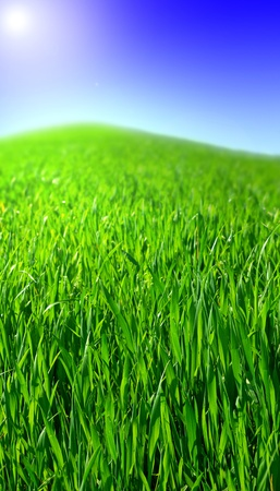 hill covered with grass under the sunlight Stock Photo