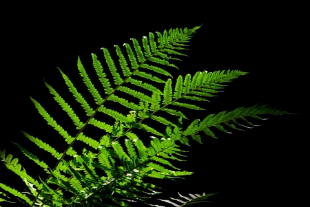 fern isolated on dark background Stock Photo