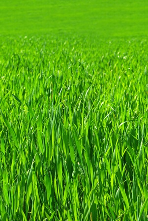 seamless grass pattern - tileable along sides Stock Photo