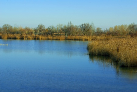 marshland in North of Italy at the end of the winter