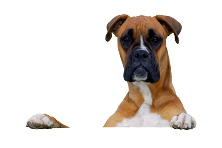 dog looking at you over white banner