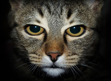nasty: Nasty cat looking at you