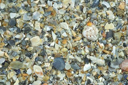 natural shells background