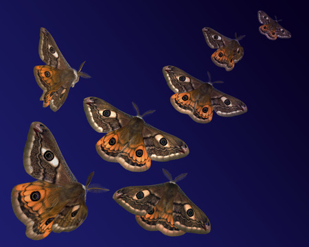 Moths (Saturnia pavoniella) flying in the night Stock Photo