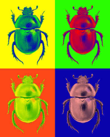 Abstract beetle (Trypocopris dung beetle) in pop-art style